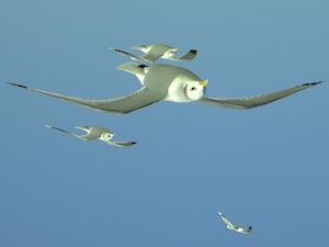 Ondersteboven vogels
